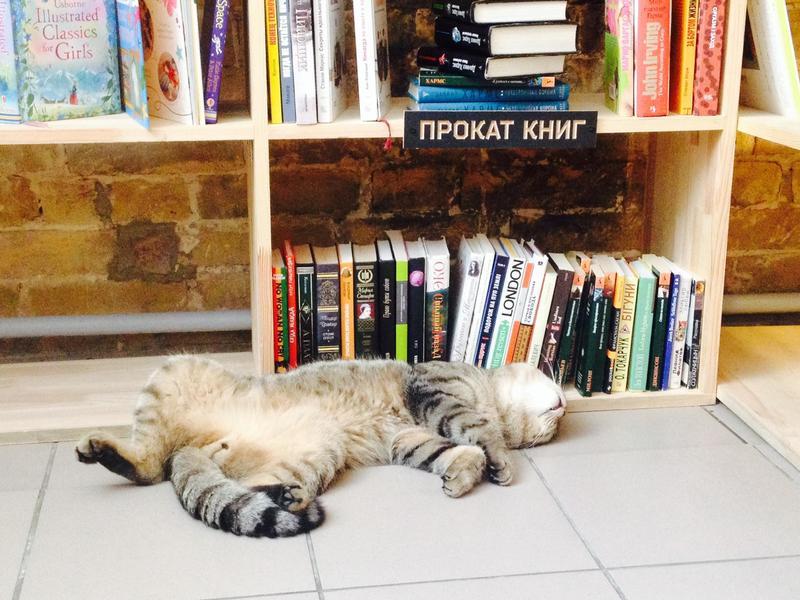 Cat in the Cafe in Kiev