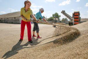 Agriculture in Ukraine