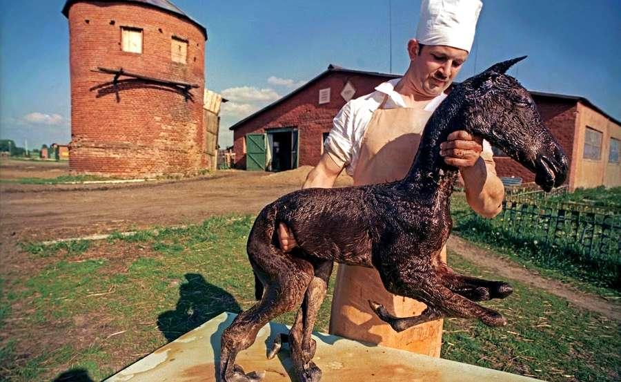 Chernobyl animals mutants
